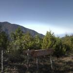 Loma del Leon